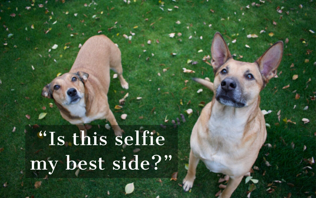 Next Big Social Media Star: YOUR PET!!!